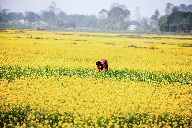 Barauli Community Homestay: Tharu Village in Chitwan