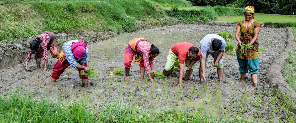 Nagarkot Farming