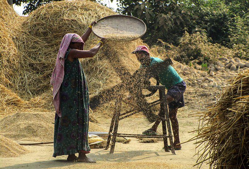 local-life-bardia-community-homestay