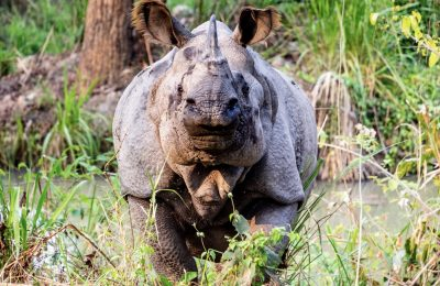 one-horn-rhino-nepal-community-homestay