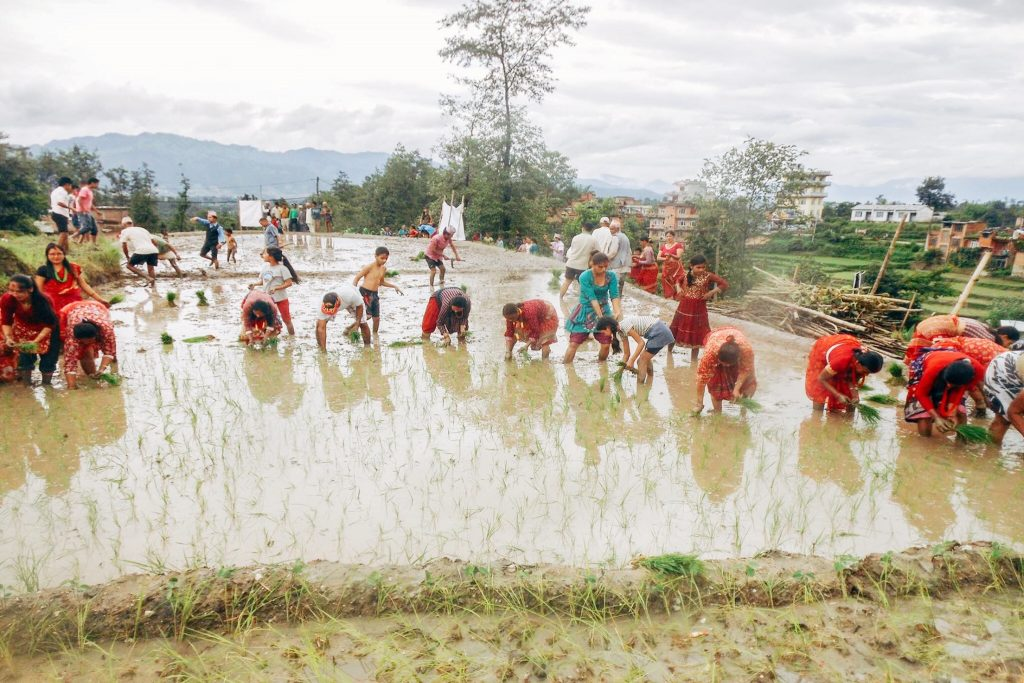 community_homestay_nepal_farm_life
