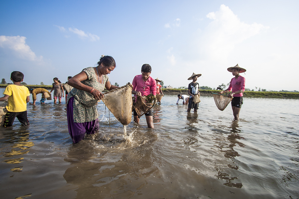 Tharu Women Fishing